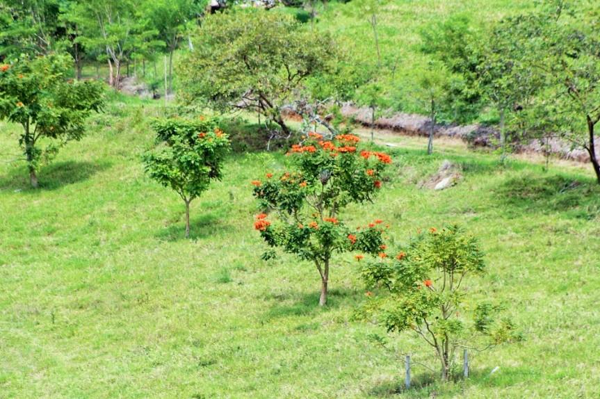 bosque-seco-tropical-altomira-2