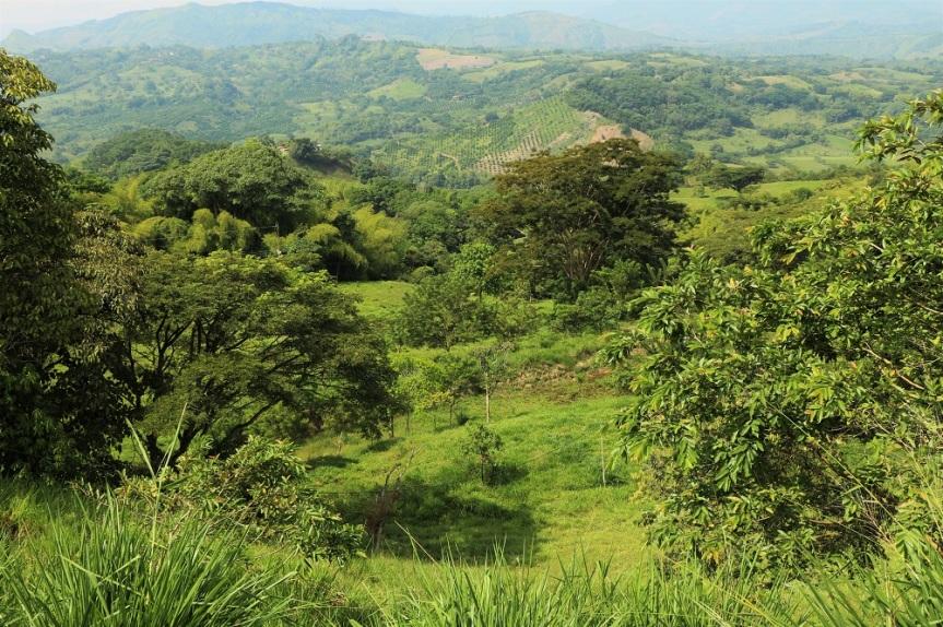 Resultado de imagen para bosques seco subtropical