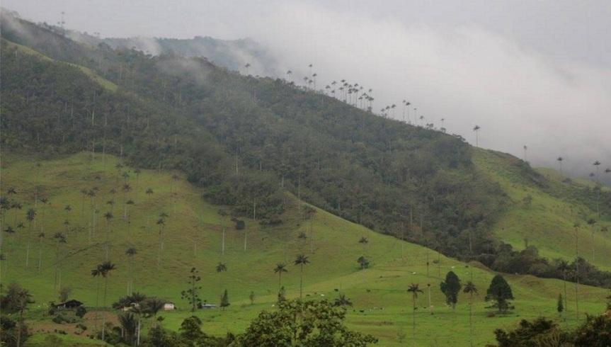 El Valle del Cocora enQuindio