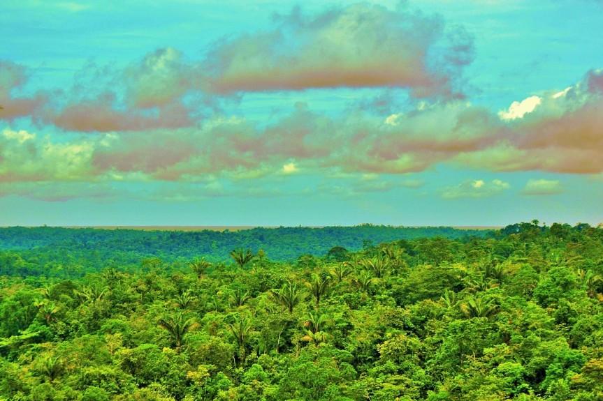 Selva del Pacifico Colombiano