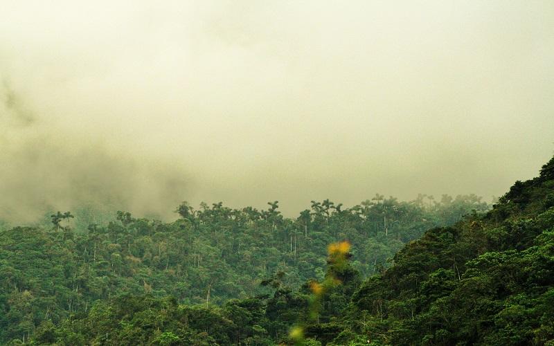 Tatama - Bosque Húmedo Tropical