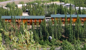 denali-grizzli-bear-resort