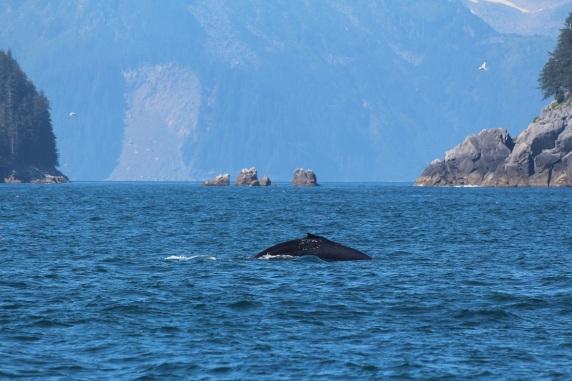Kenai-Fjords-National-Park-alaska-ecoturismo-16
