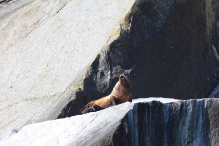 Kenai-Fjords-National-Park-alaska-ecoturismo-32