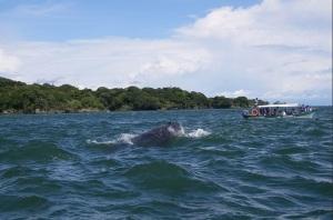 pesca-deportiva-flyfishingcolombia-bahia-solano