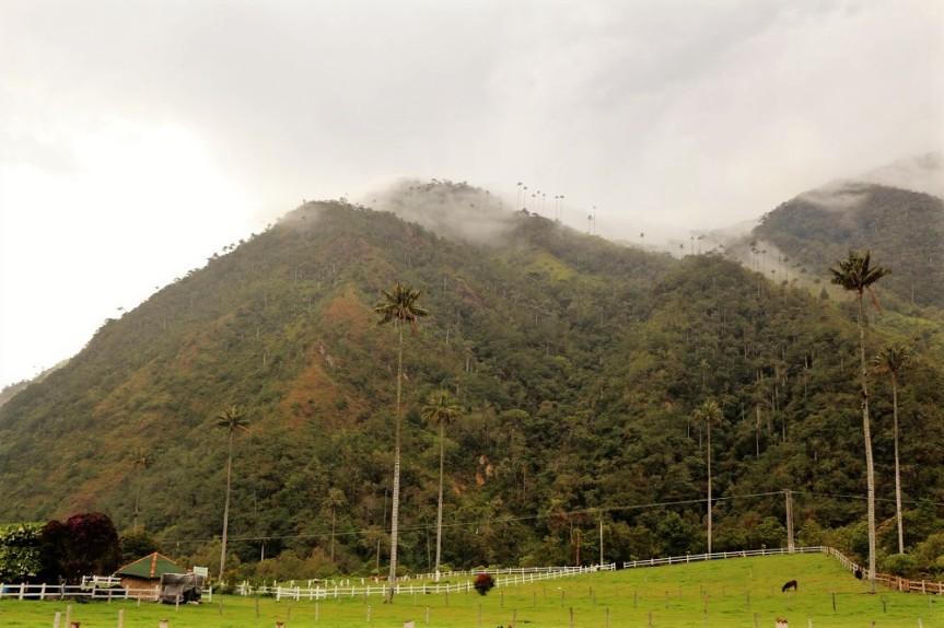 Las Palmas de Cera en el Valle de Cocora