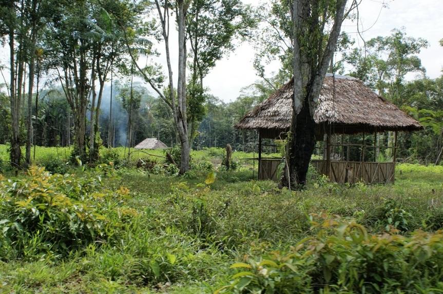 Senderos del Amazonas
