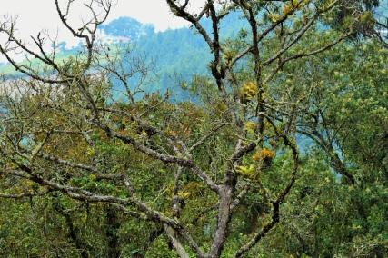 manizales-colibries-la-alambra-19