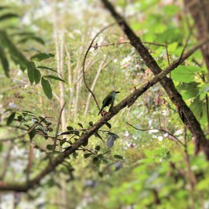 Tucan en el Bosque de la Alhambra