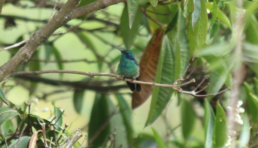 Colibri en el Bosque de la Alambra