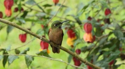 colibries-10