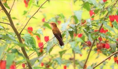 colibries-12