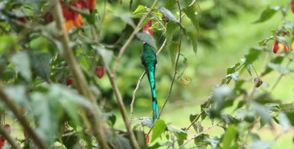 colibries-15
