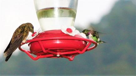 colibries-19