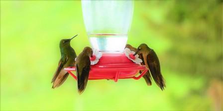 colibries-3