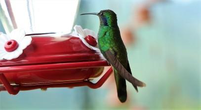 colibries-4