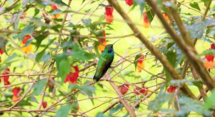 colibries-5