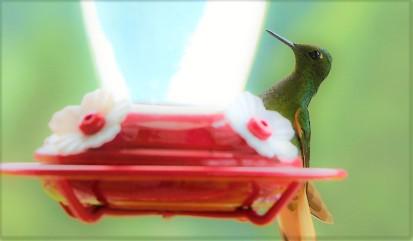 colibries-6
