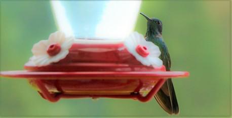 colibries-8