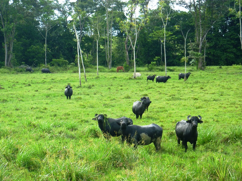 estoraques-parques-nacionales-de-colombia-santander-11