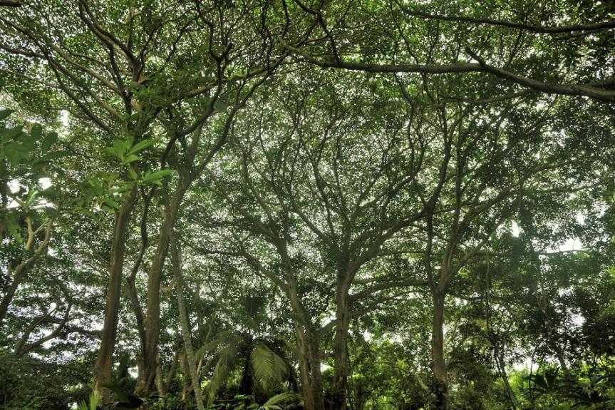 17-tayrona-playas-de-arrecifes-parques-naturales-senderos