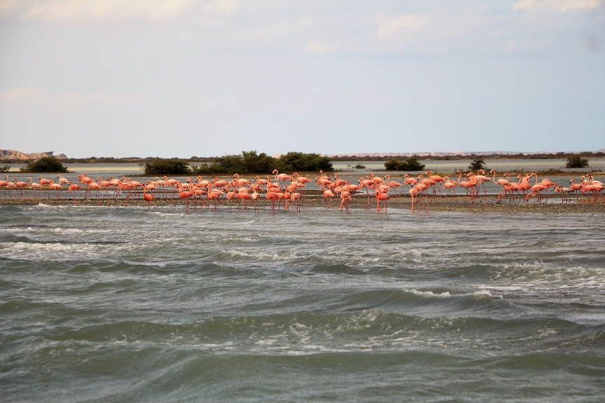 68-guajira-punta-gallina-flamingos