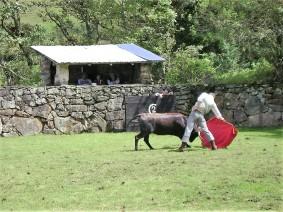 12-pacho-cundinamarca-toros-de-lidia