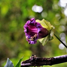 14-pacho-cundinamarca-flores