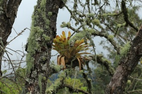 19-pacho-cundinamarca-flores