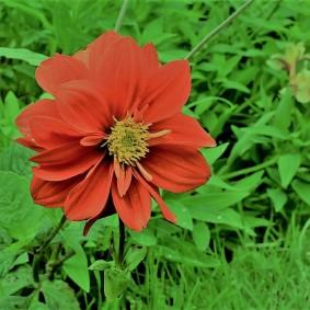 20-pacho-cundinamarca-flores