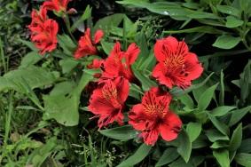 25-pacho-cundinamarca-flores