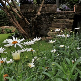 26-pacho-cundinamarca-flores