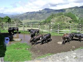 4-pacho-cundinamarca-toros-de-lidia