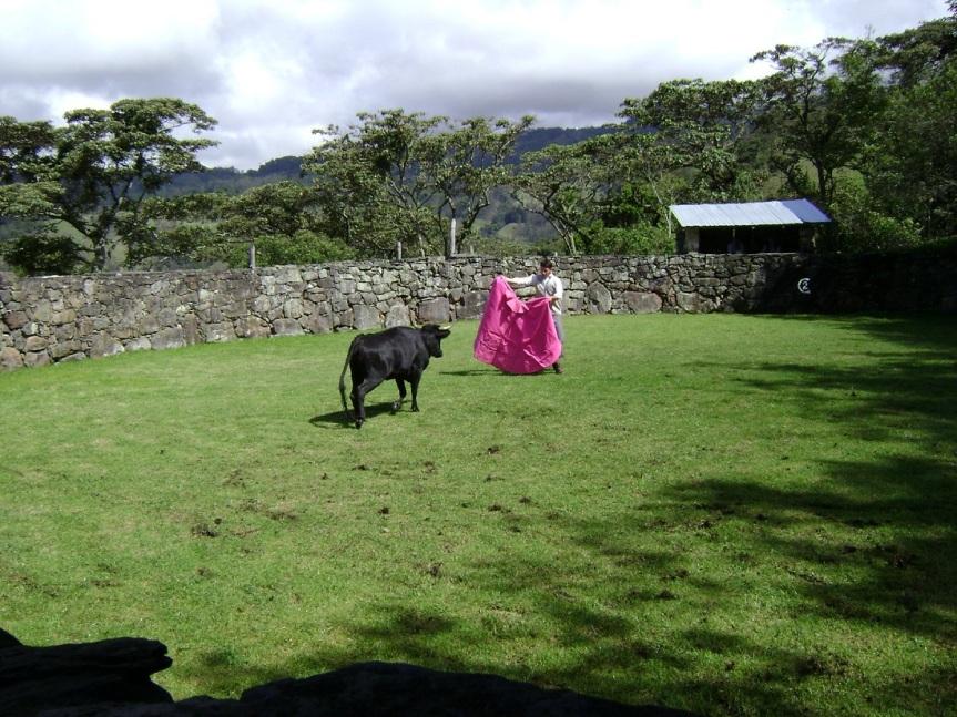 9-pacho-cundinamarca-toros-de-lidia