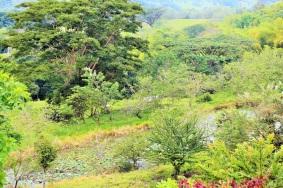 bosque-seco-tropical-altomira-manizales