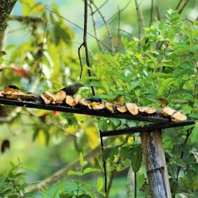 carpinteros-auphonias-altomira-pajaros