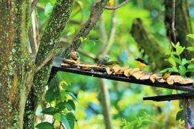 finca-altomira-aves-ecoturismo