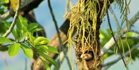 nido-de-carpintero-aves-de-altomira
