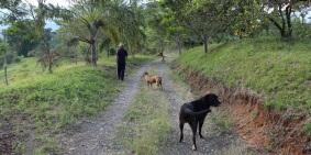paseando-con-perros-altomira