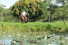 paseos-a-caballo-altomira-fincas-manizales