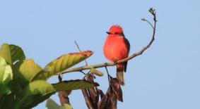 titiribi-aves-de-manizales