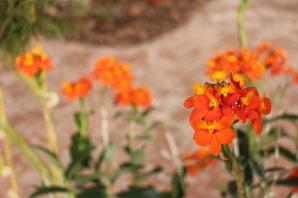 orquideas-recinto-del-pensamiento-manizales-10