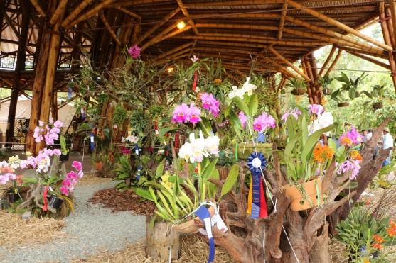 orquideas-recinto-del-pensamiento-manizales-12