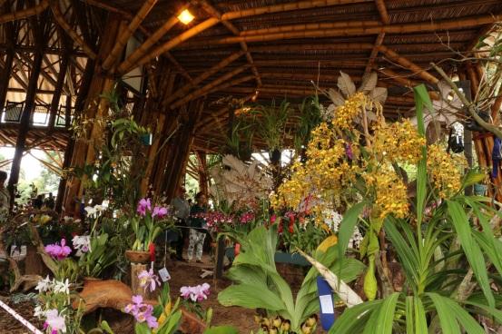 orquideas-recinto-del-pensamiento-manizales-16