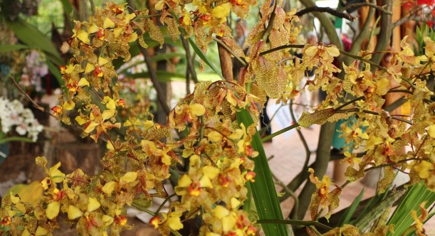 orquideas-recinto-del-pensamiento-manizales-17
