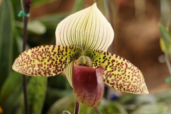 orquideas-recinto-del-pensamiento-manizales-20