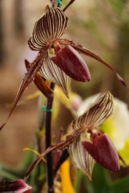 orquideas-recinto-del-pensamiento-manizales-21