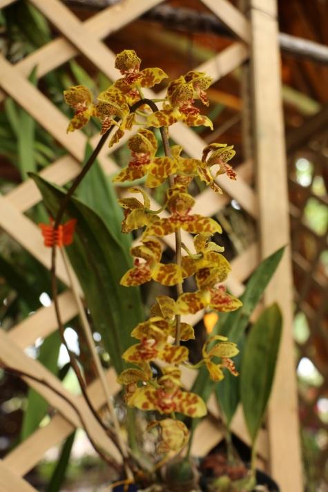 orquideas-recinto-del-pensamiento-manizales-26