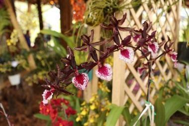 orquideas-recinto-del-pensamiento-manizales-27