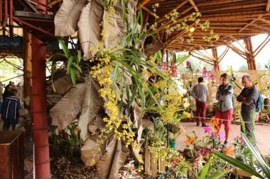 orquideas-recinto-del-pensamiento-manizales-28